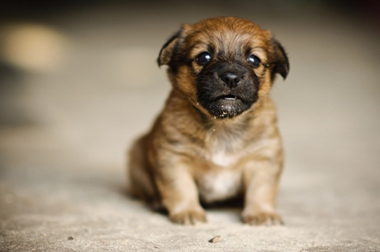 Simply adorable puppy!