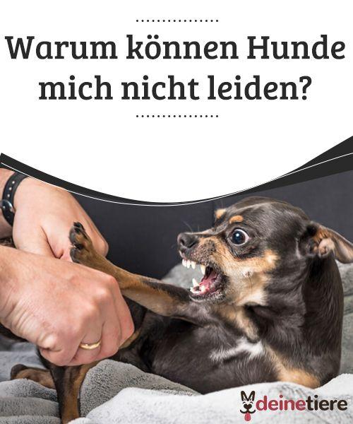 Hund Bellt Nicht