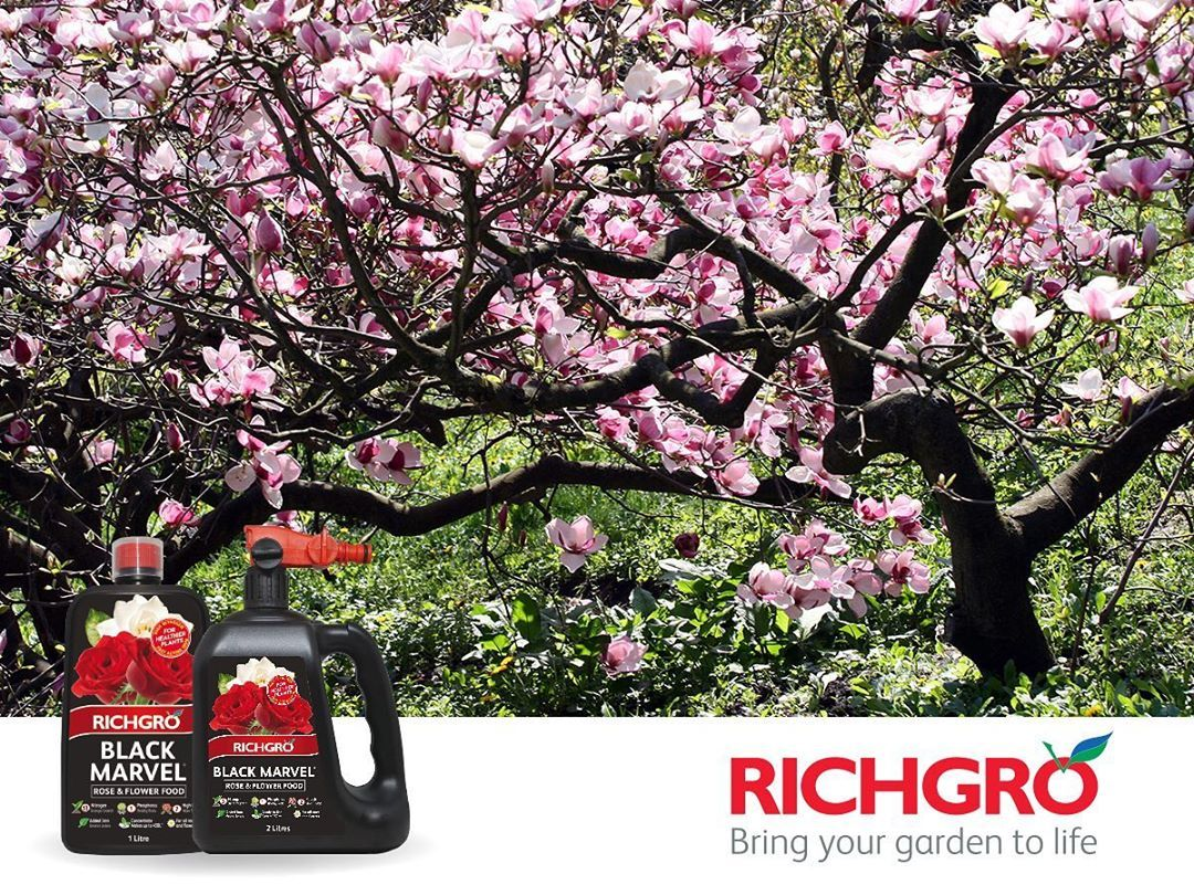 5 Secrets To Getting Gorgeous Flowers Flowering Cherry Tree Flowering Trees Blossom Trees