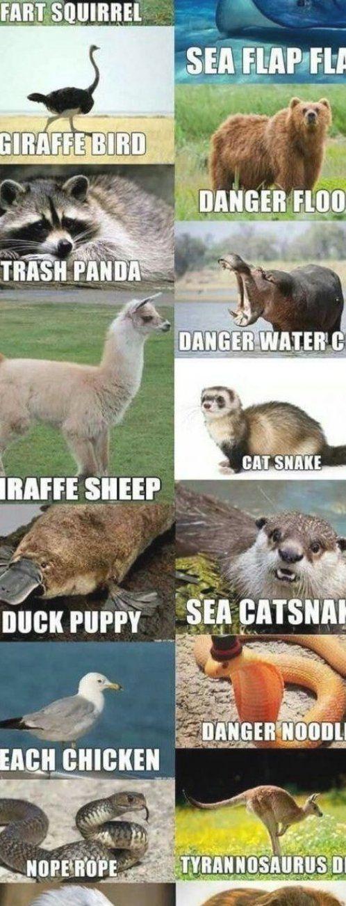Photo of Alternate names for animals   #2020 #Alternate #animal #Animals #anime