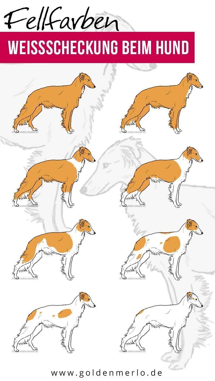 WEISSE FLECKEN beim Hund Woher kommen die weißen Flächen