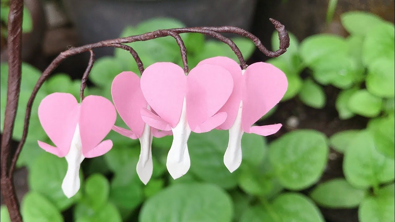 Abc Tv How To Make Easy Bleeding Heart Paper Flower Craft Tutorial Youtube