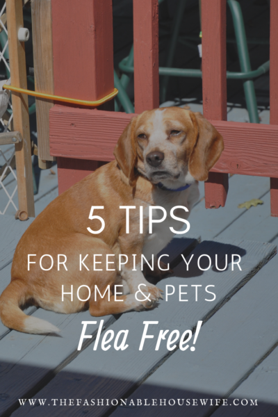 5 Tips for Keeping Your Home and Pets FleaFree Fleas