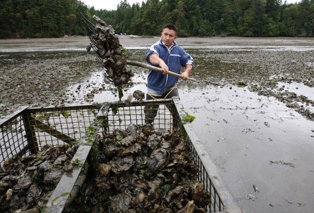 A mass die-off of scallops near Qualicum Beach on Vancouver Island is being linked to the increasingly acidic waters that are threatening ma...