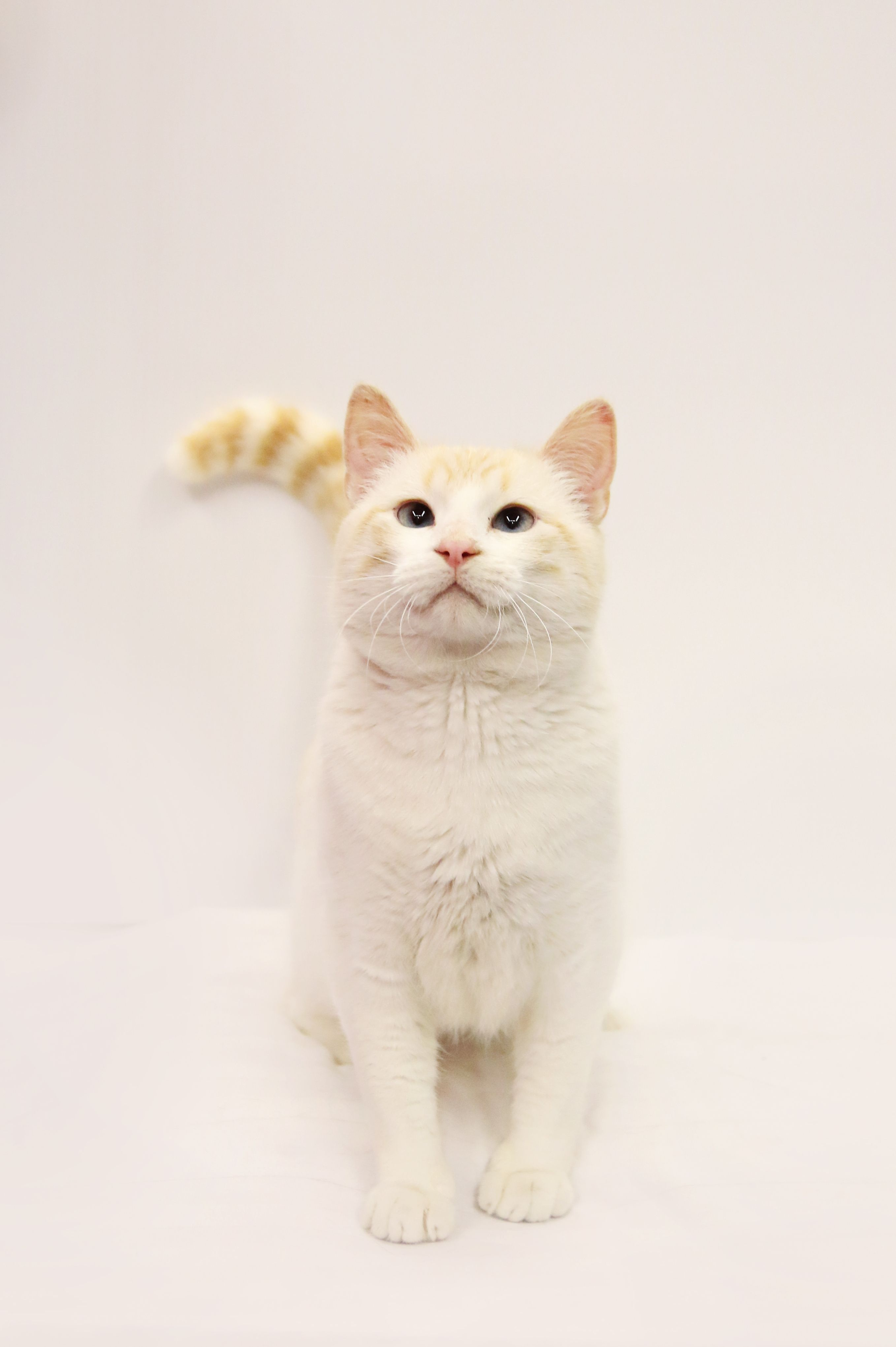 Adopt Boggle on Petfinder Cat adoption, Cats, Cat stock