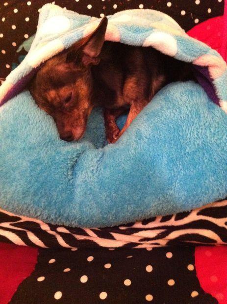 Diy Dog Bed Or Cat Bed Diy Dog Bed Dog Pillow Bed Dog Beds