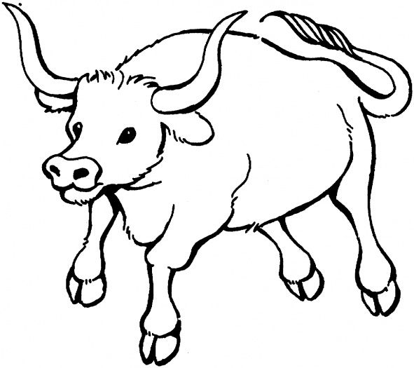 Colouring Pages For Children Of Bulls Free Download Kids