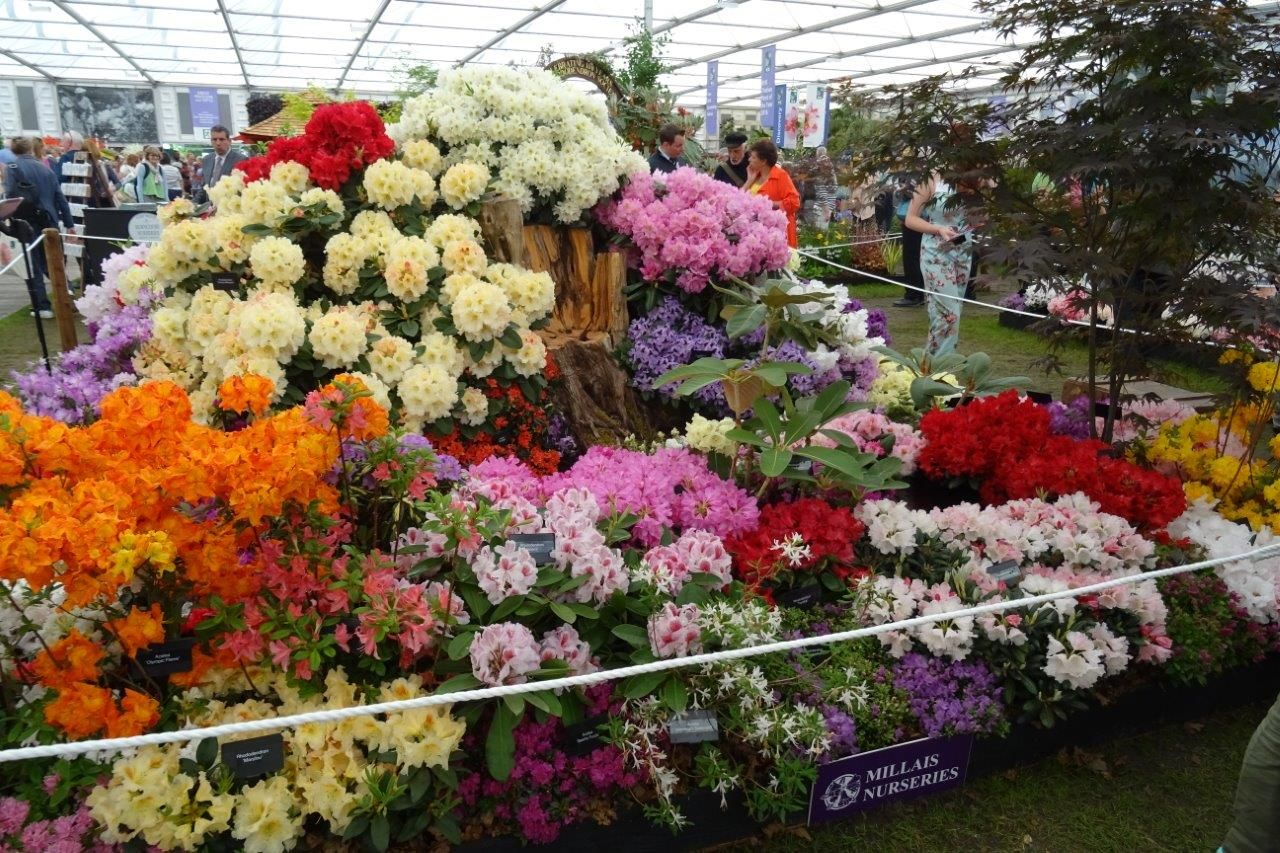 We got our acceptance through to exhibit at Chelsea Flower