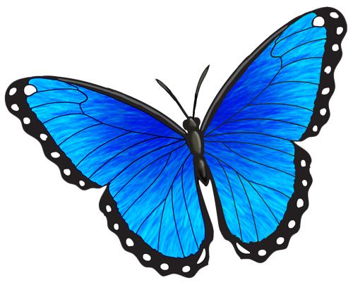 5c142c2ff Blue Morpho - Drawing | Butterflies | Blue morpho, Morpho butterfly ...