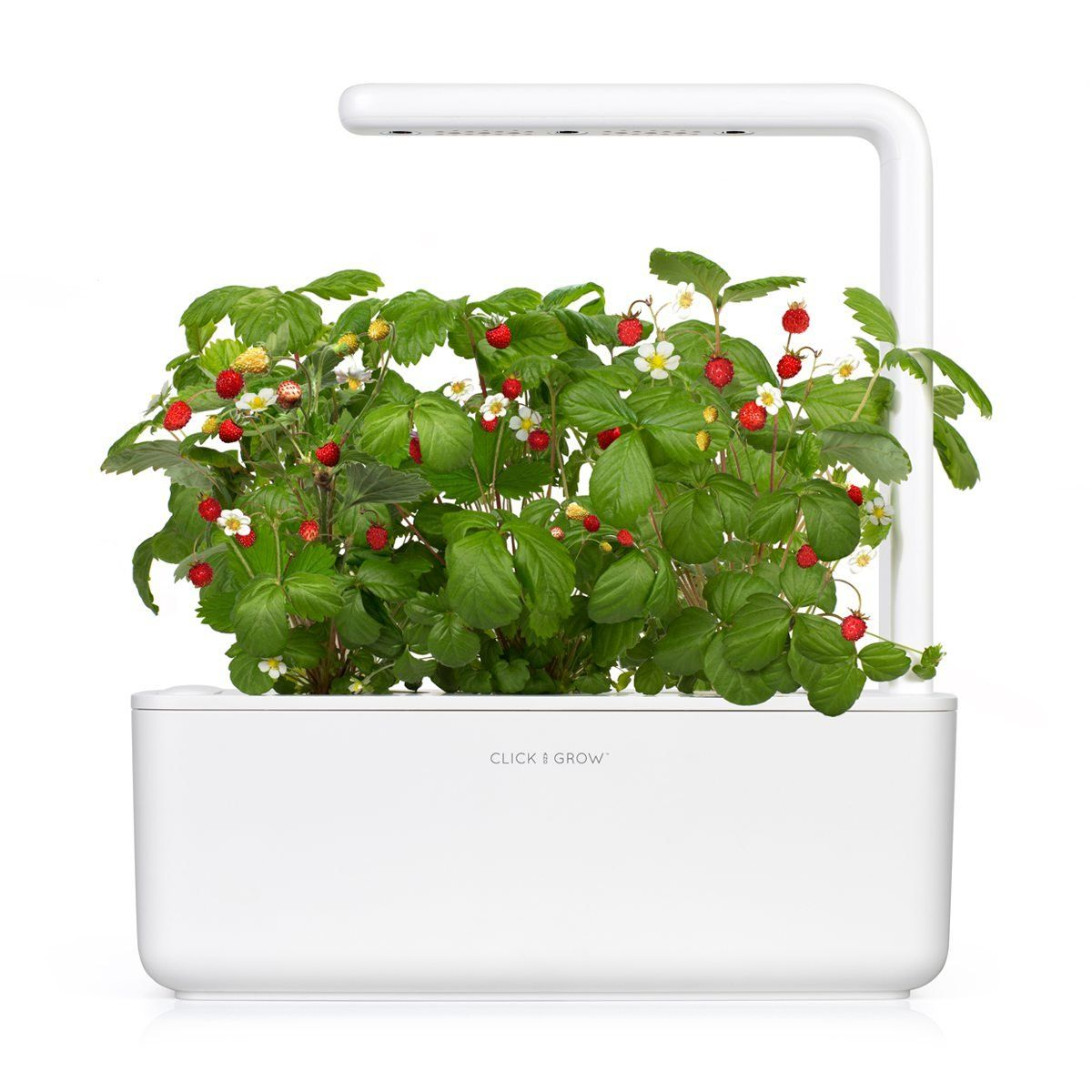 Click And Grow Sgr24x3 Smart Garden Wild Strawberry Plant Pods Want Additional Info Click On The Image It Is In 2020 Strawberry Plants Smart Garden Planting Herbs
