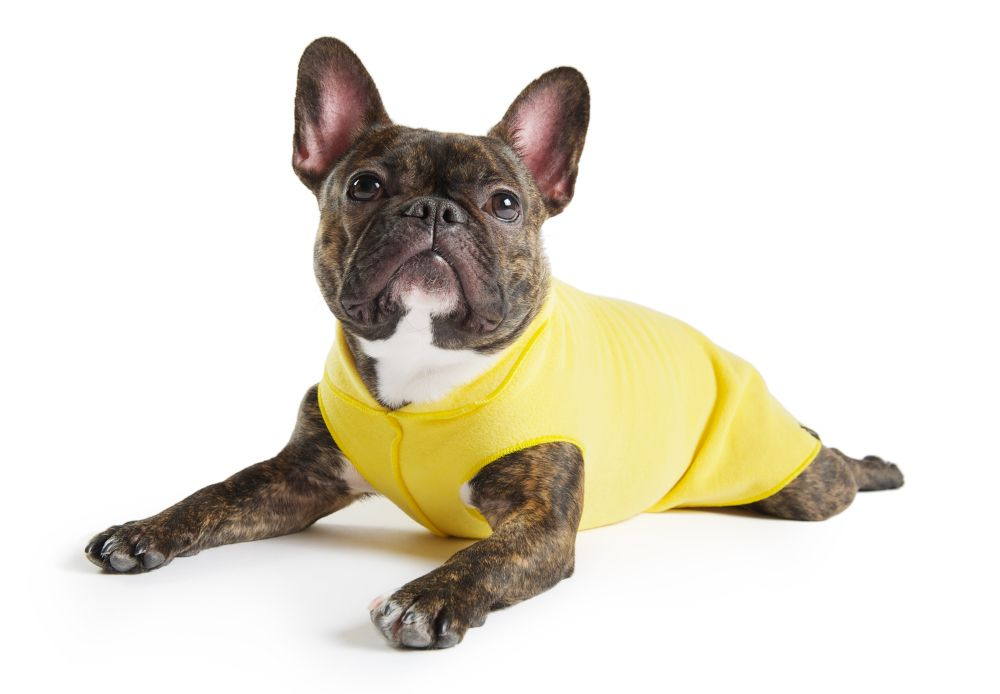 Fleece Pullover Jackets from Gold Paw Series French