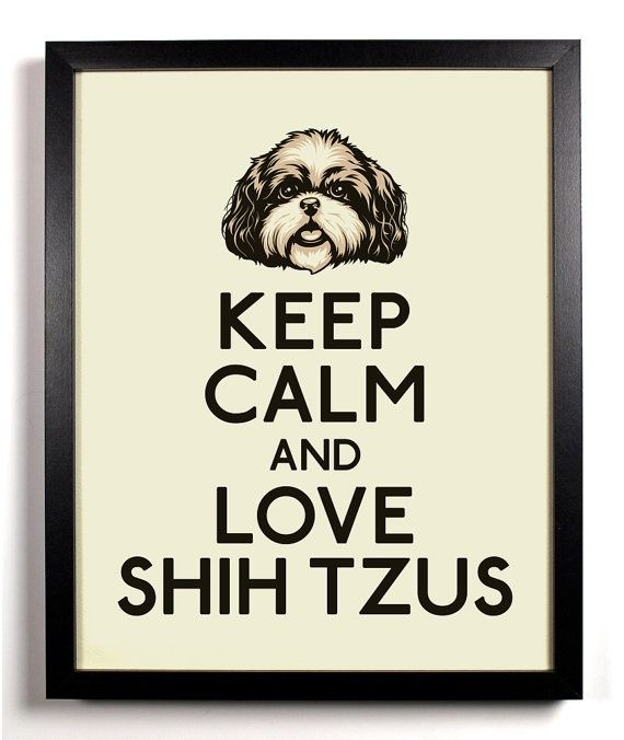 Keep Calm And Love Shih Tzus At Kirstie Malley Malley Knox Shih Tzu