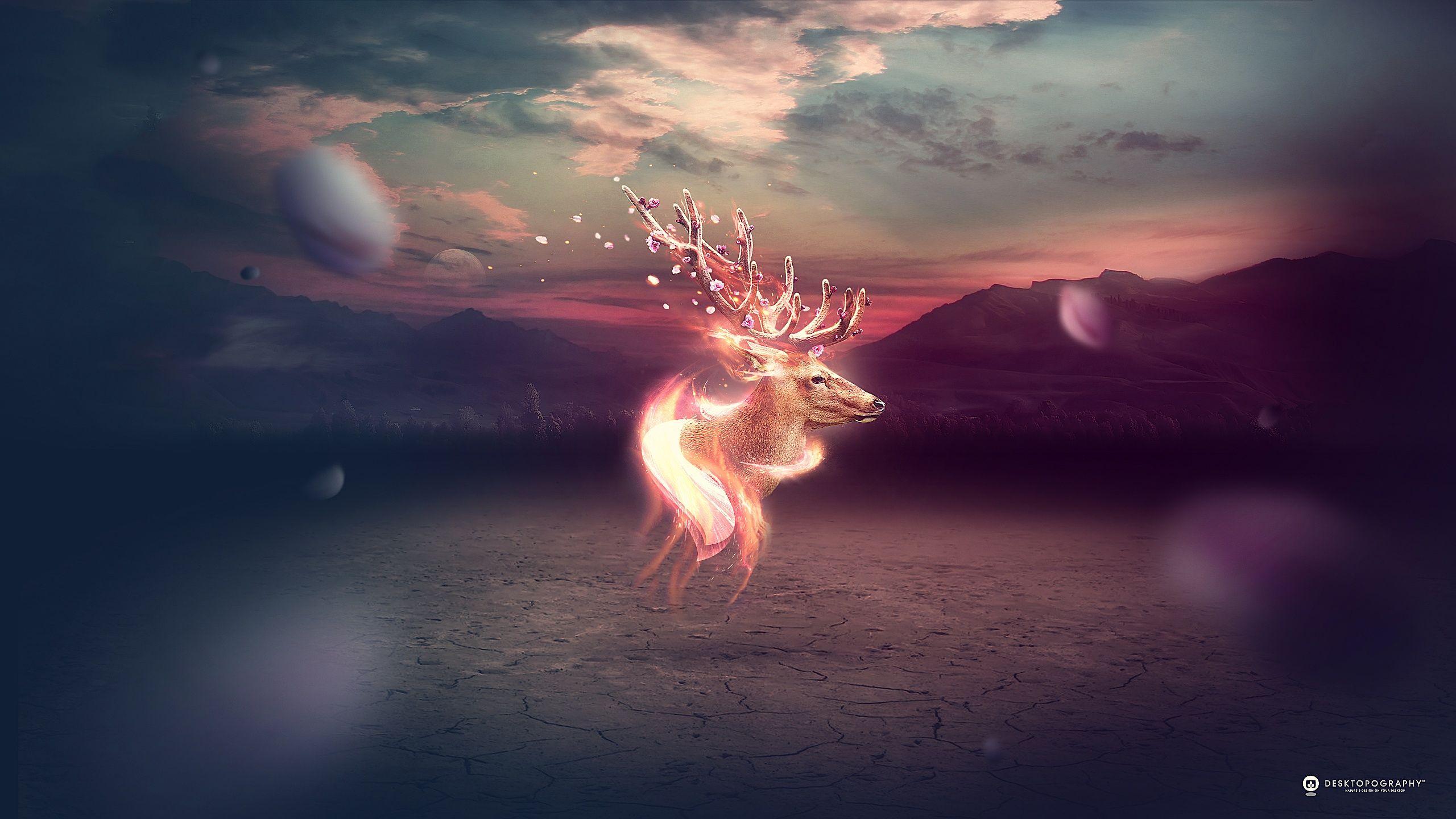 Deer Wallpapers Wallpaper