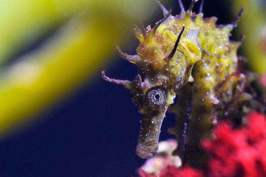 Seahorse Beauty by Josef Gelernter on 500px