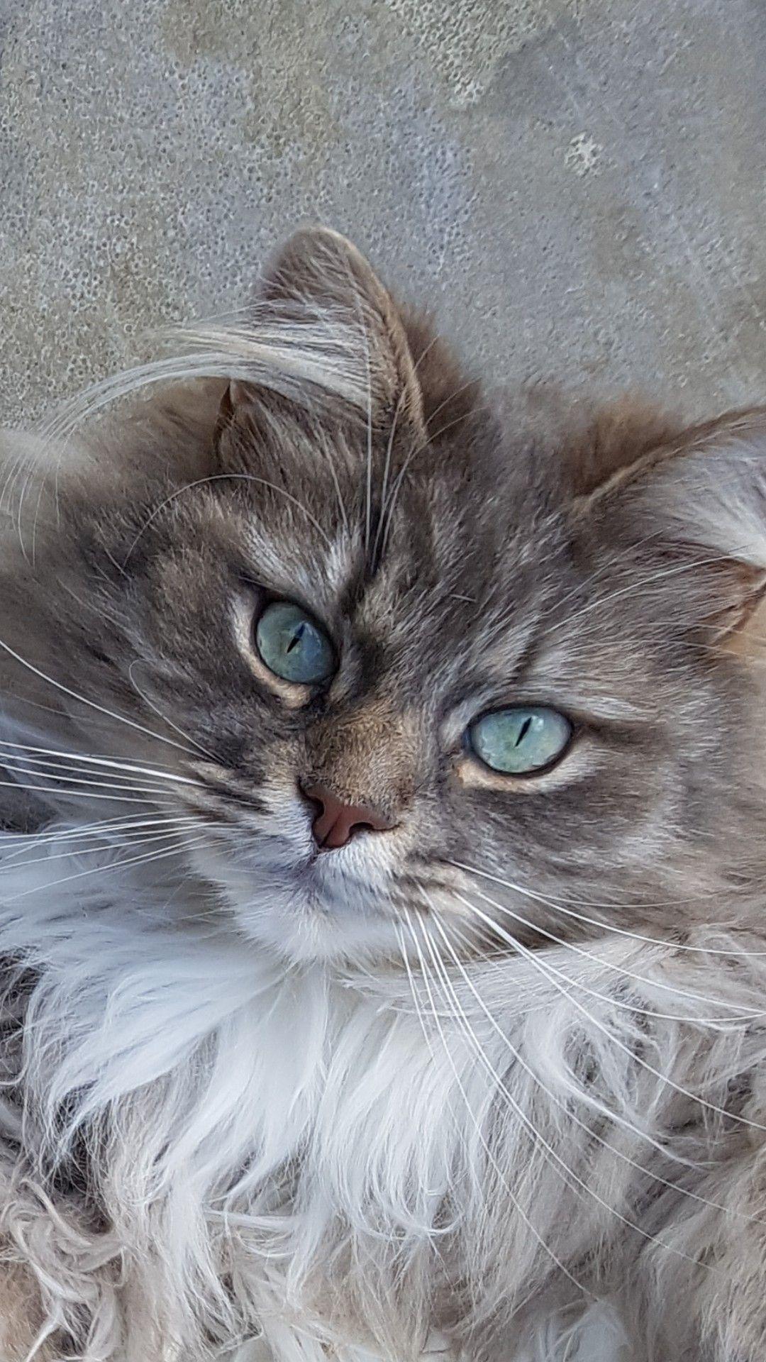 Gatos & Cats 😻 (gato_cats) Instagram Posts, Videos