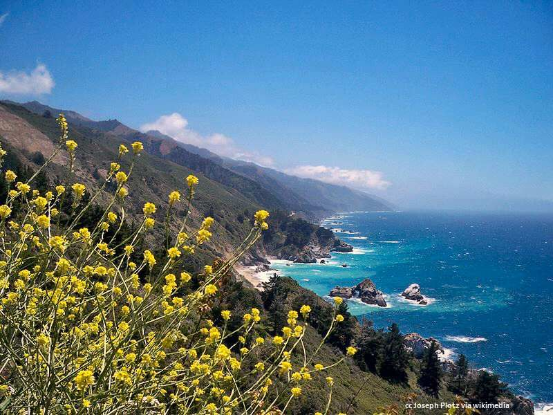 Coastal wildflowers on the Big Sur coast - mustard creating a beautiful foreground. Click for more photos...