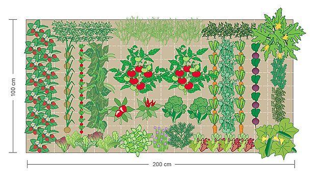 beispiel f r einen bepflanzungsplan garten pinterest g rten gem seanbau und pflanzen. Black Bedroom Furniture Sets. Home Design Ideas