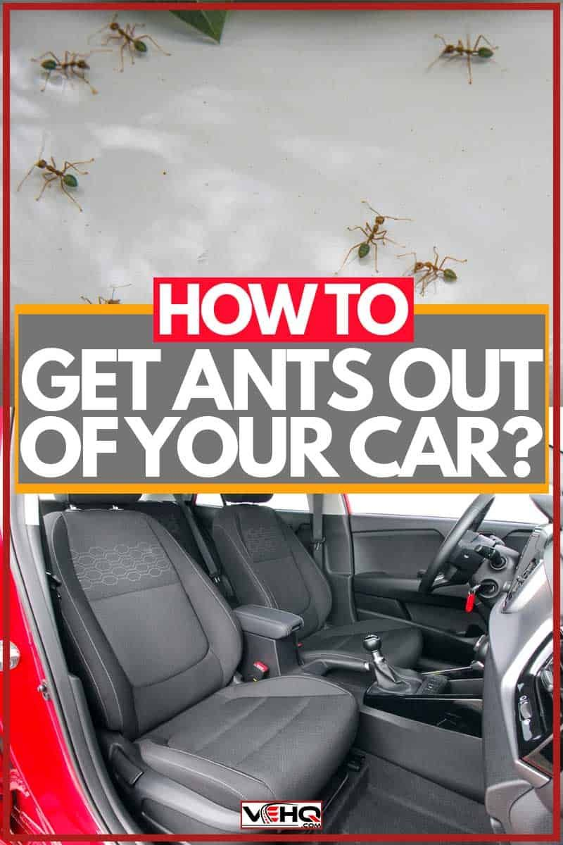 How To Get Ants Out Of Your Car Ants Ant Infestation Inside Car