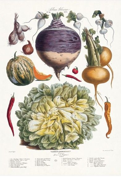 Turn Your Kitchen Into An Art Gallery Frutas Y Verduras Flores Botanica