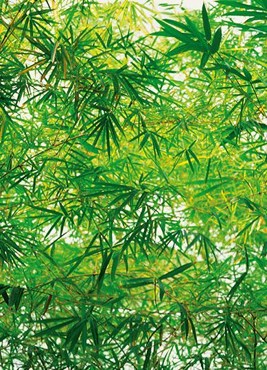 Bamboo - Leaves - Tapet Udsalg - Tapetkunst.dk