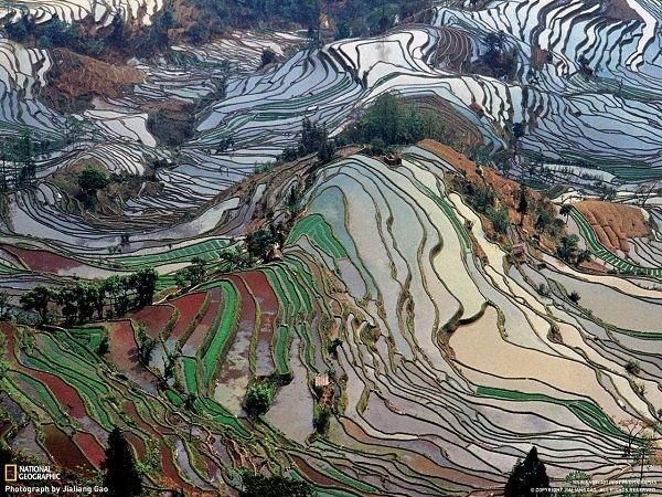 云南的元阳梯田,是哈尼族人世世代代留下的杰作,位于云南元阳县哀牢山南部。