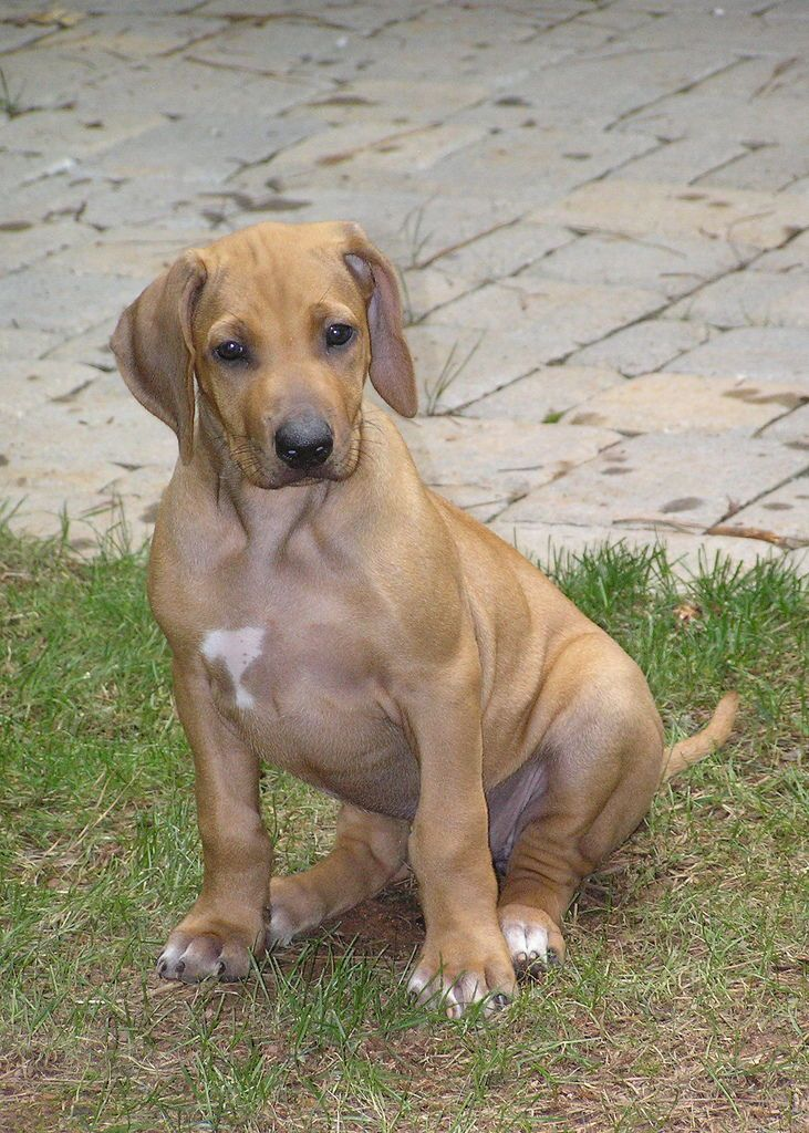 Huge Costly Mistakes That Puppy Owners Make Dog training