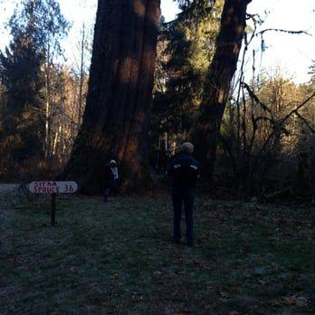Photo Of Hemstrom Valley Tree Farm Christmas Trees