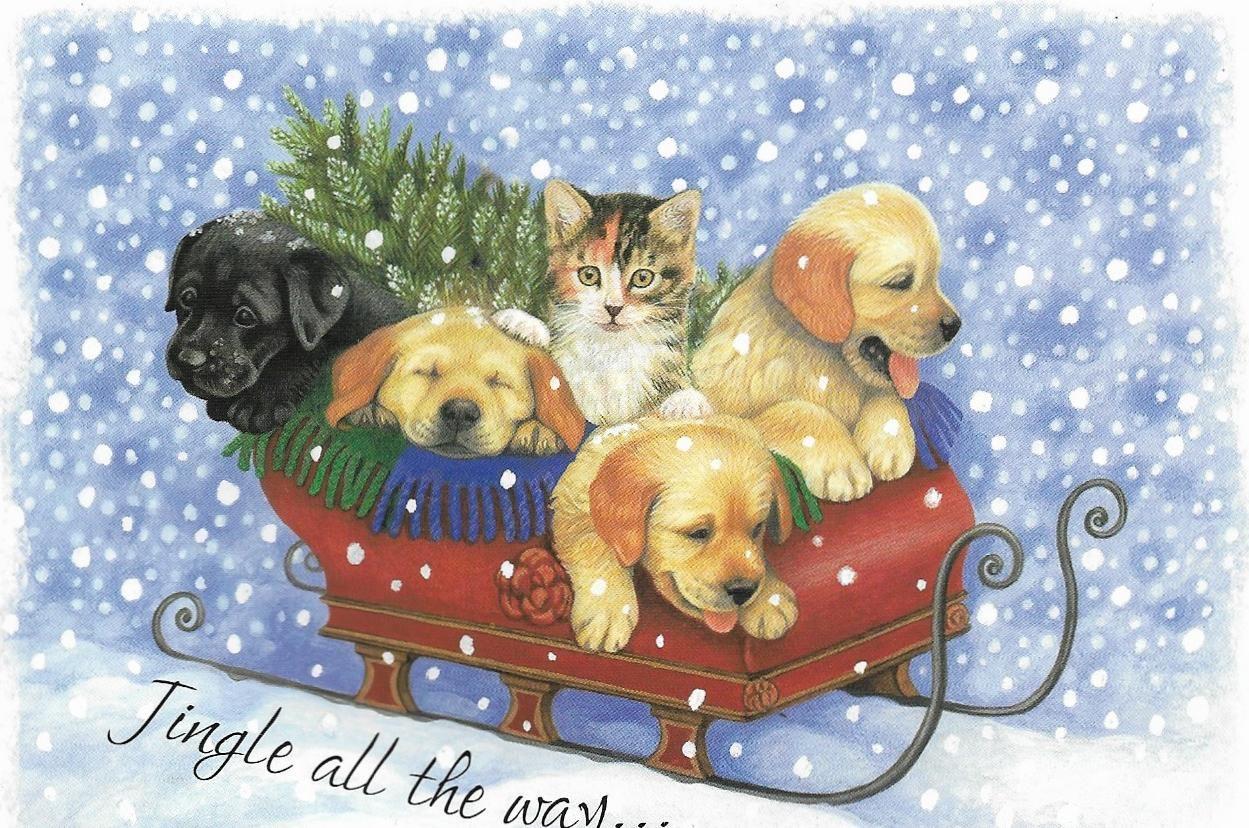 Pin by Deanna Hughes on CHRISTMAS CARDS Christmas cats