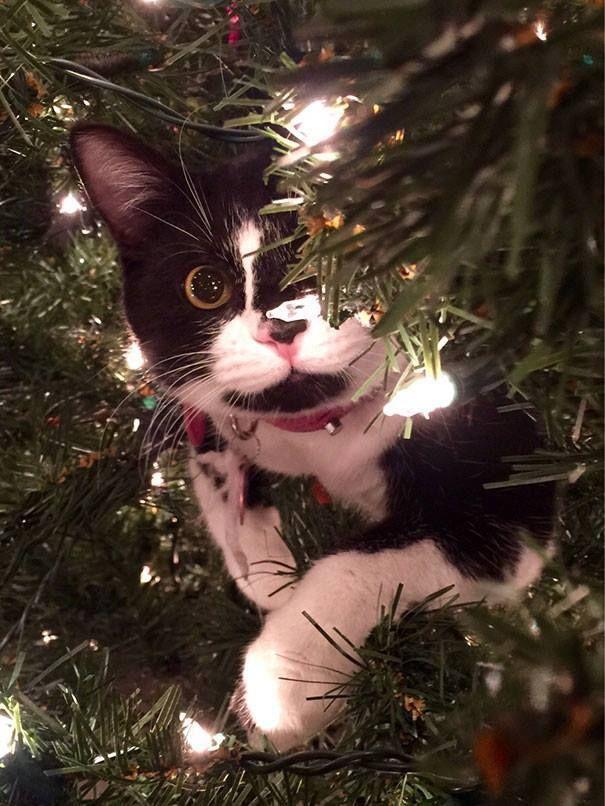 man schm ckt den weihnachtsbaum und dann ist auf einmal die katze da diy bastelideen. Black Bedroom Furniture Sets. Home Design Ideas