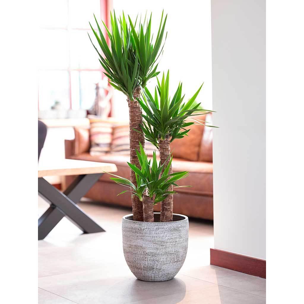 Karlijn Plant Pot Earth Yucca Houseplant Plant pot