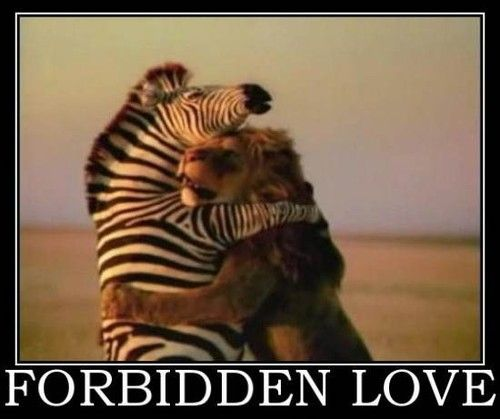 Image result for forbidden love funny