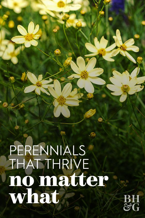 19 Power Perennials That Thrive No Matter What