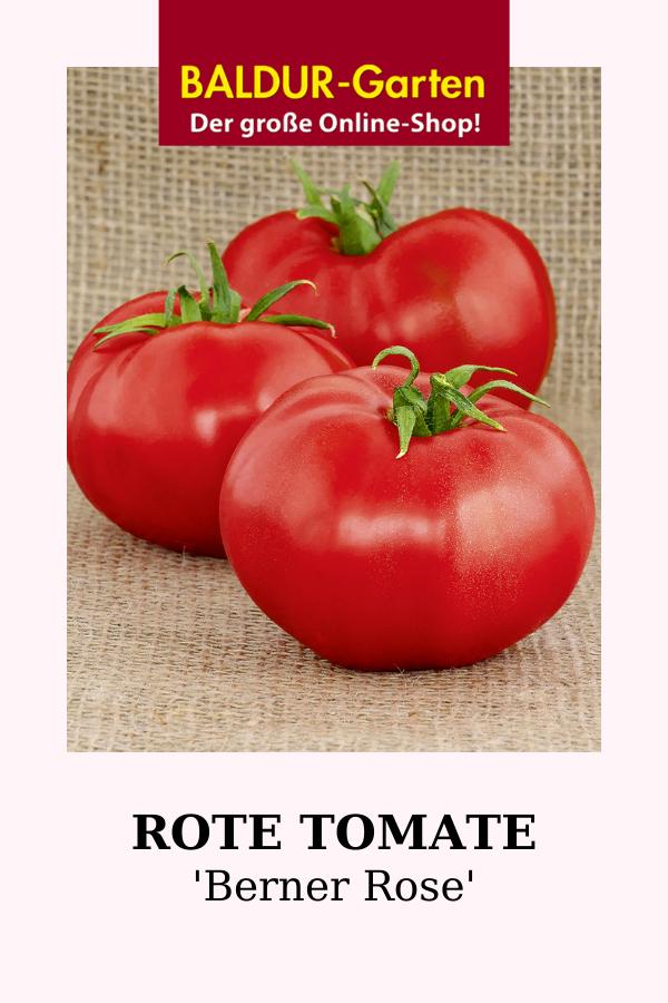 Rote Tomate Berner Rose 1a Qualitat Baldur Garten In 2020 Tomaten Sorten Tomaten Tomatensorten