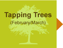 6a23985dbac Tap My Trees - Maple Sugaring for the Hobbist - Maple Syrup Supplies –  TapMyTrees