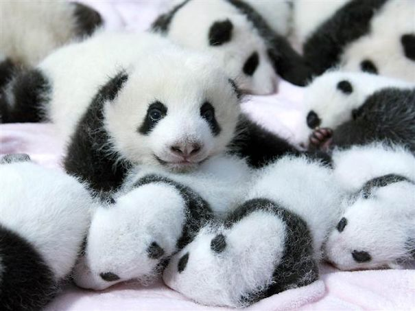 154 Of The Cutest Baby Animals Of All Time