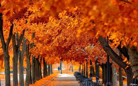красивые картинки для фона в фотошопе природа