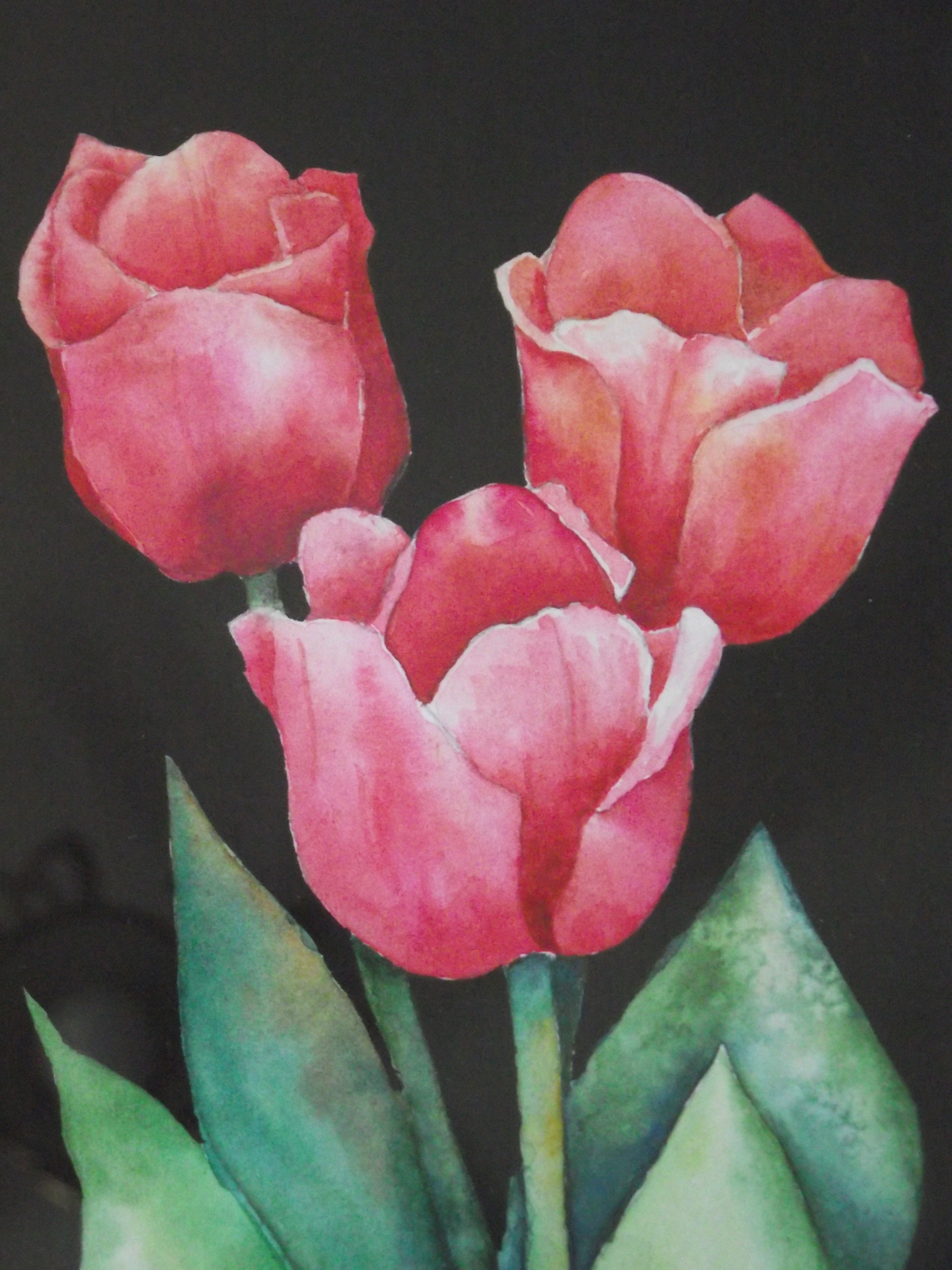 This Tulip Trio Is A Watercolor And Gouache Painting Of My Own