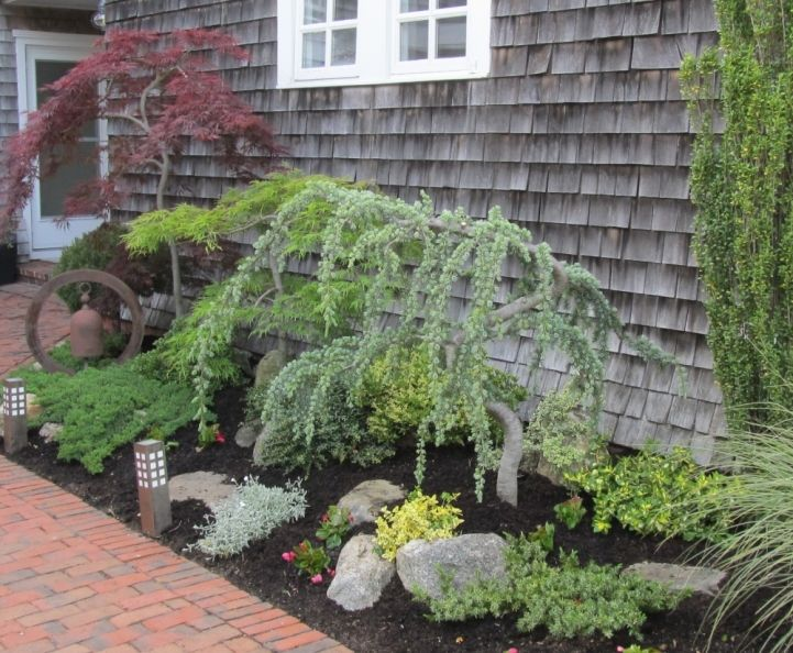 Japanese maples and a weeping blue atlas cedar in it as for Japanese trees for landscaping