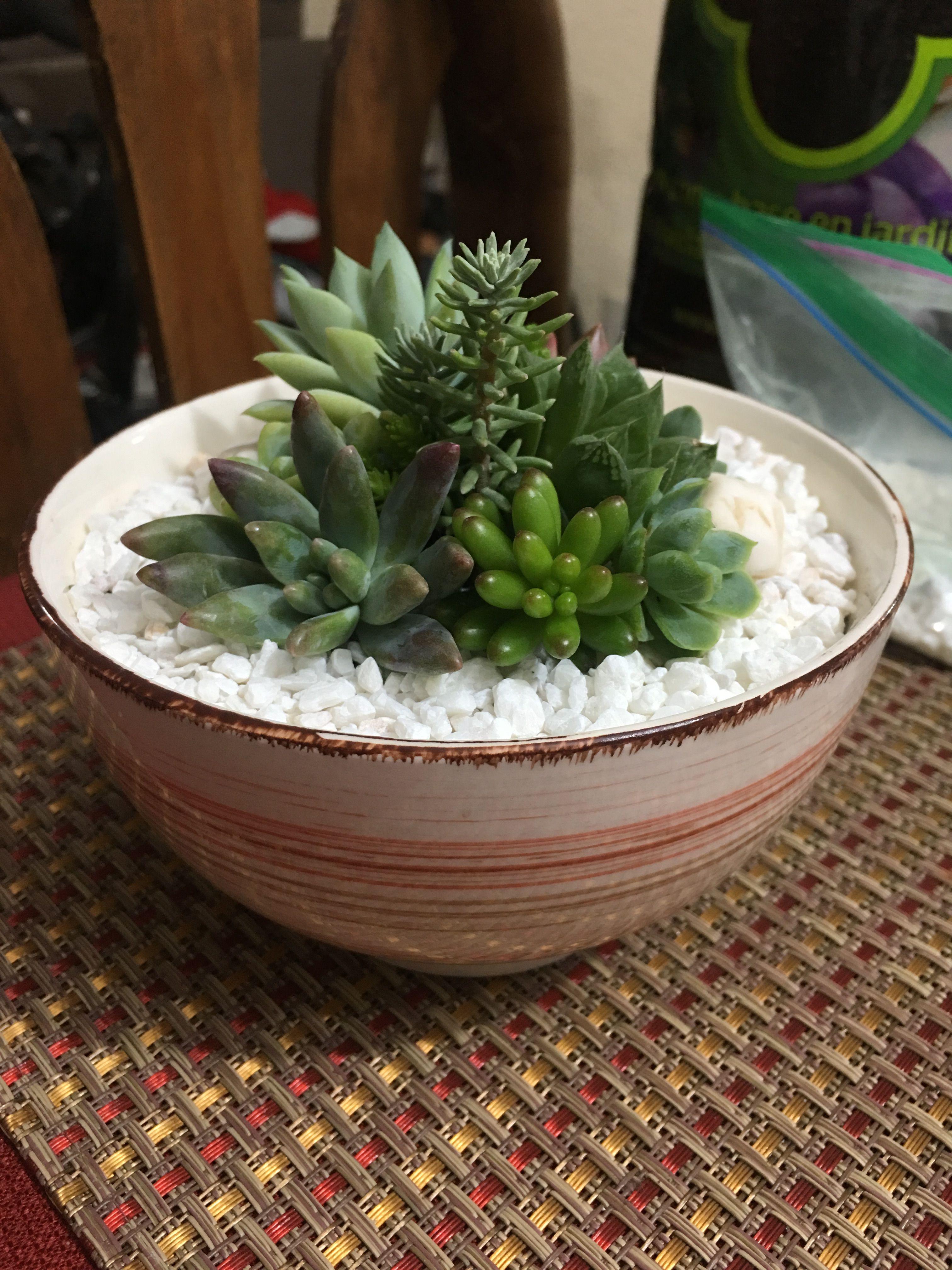 jardin miniatura Jardin Miniatura Suculentas Y Cactus Jardines