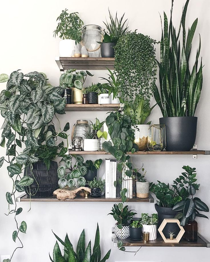 10 fabulous plant shelfies is part of Plant decor indoor, Plant decor, House plants indoor, Interior plants, Plant shelves, House plants decor - Inspiring houseplant displays spotted on Instagram  from windowsill arrangements to ladder shelving