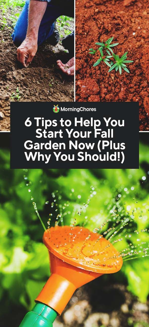 Fall Gardening: How to Plan and Start a Fall Garden at the Right Tim