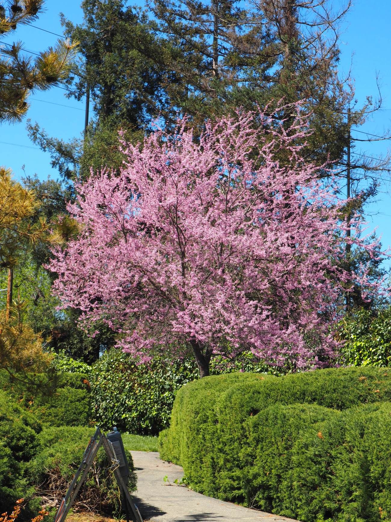 Easter Sunday at the Japanese Friendship Garden Easter