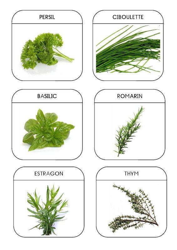 Imagier du jardin les plantes aromatiques 1 montessori for Le jardin voyageur maternelle