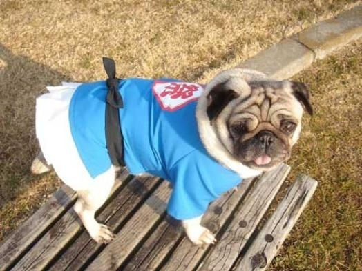 7. Pug in Happi from Gramercy Pet