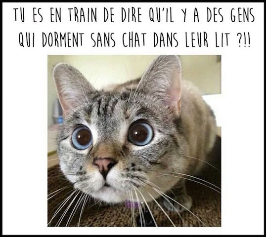 Humour o dort votre chat animaux mignons blague animaux humour chiens chat humour - Images de chats rigolos ...