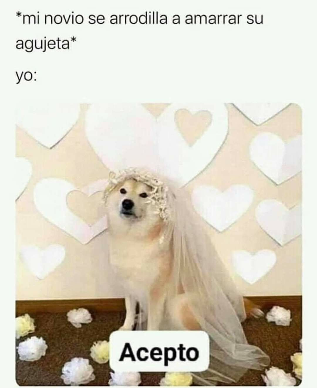 Pin De Alejandro Mendez En Memes En Espanol Memes Divertidos Memes Buenisimos Memes