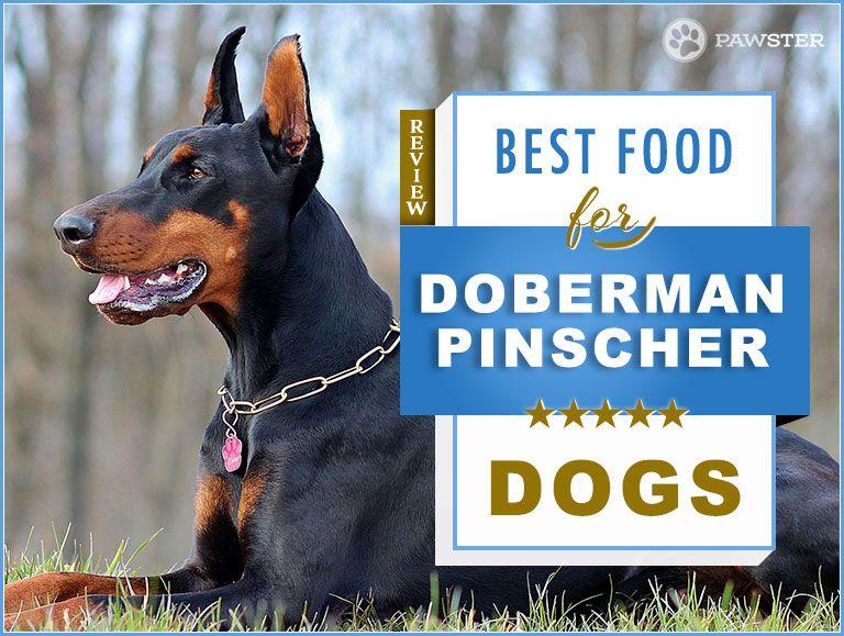 Best Dog Food For Doberman Pinschers Doberman Doberman Puppy