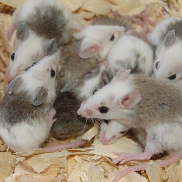South Florida Rodents Free Shipping Frozen Mice Cute Animal Pictures Animals Cute Animals