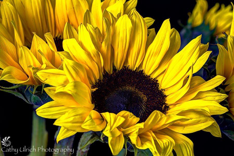 Resultado de imagem para sunflower like flowers