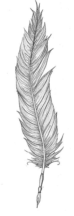 Quill Tattoo Feather With Quill Tattoo Feather Tattoos Feather Drawing